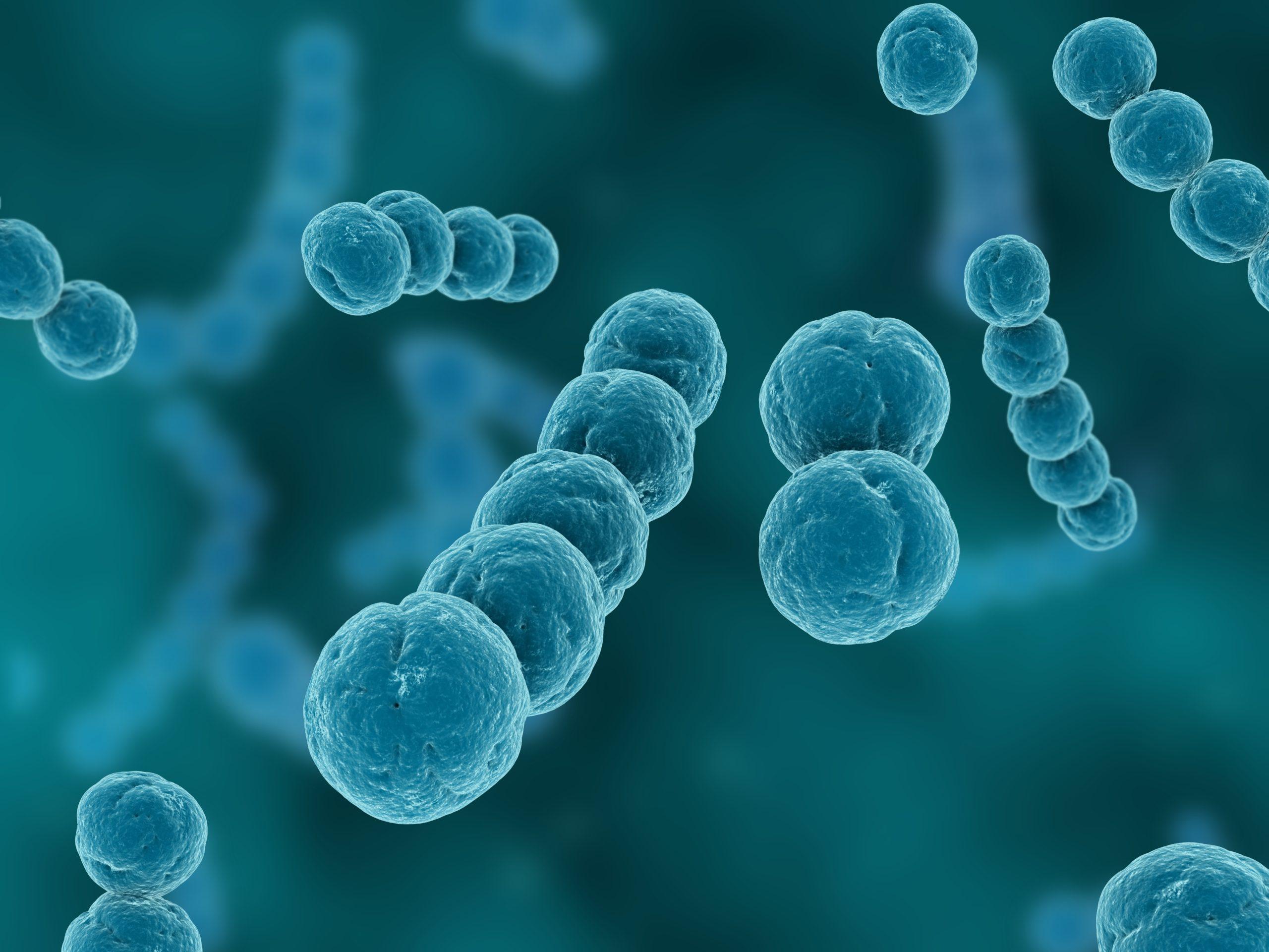 патогенные стрептококки