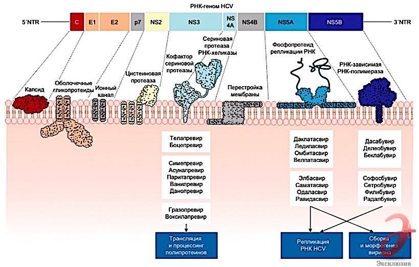 Молекулы-ингибиторы