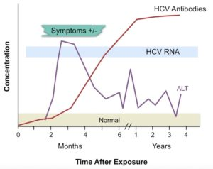 Рис. 2. Лабораторные маркеры при остром гепатите С (острой HCV-инфекции) (по: А. Maheshwari et al.; 2008)