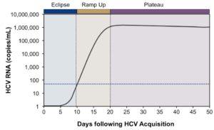 Рис. 4. Острый гепатит С (острая HCV-инфекция): динамика виремии RNA HCV (по: S. Glynn et al.; 2005)